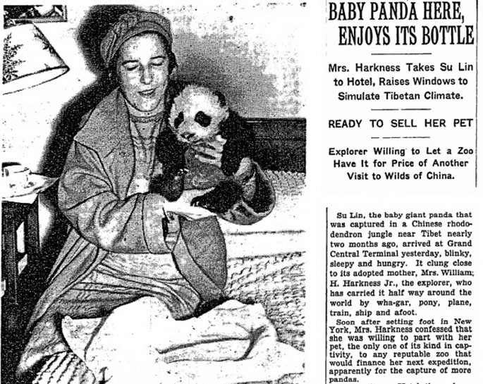 This Day in History: First Panda to Leave China Discovered