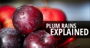 Explainer: The Plum Rain Season of East Asia