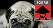 KFK Podcast: China's Canine Crackdown, Thanksgiving and Airport Hacks