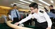 17 Ivory Smugglers Busted by Shenzhen Customs