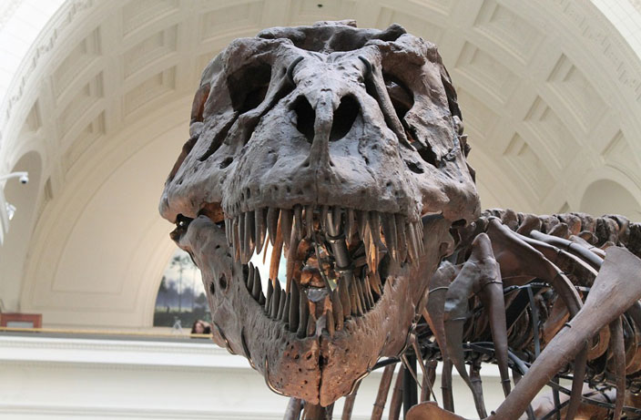 Uncovering China's Illegal Dinosaur Fossil Trade