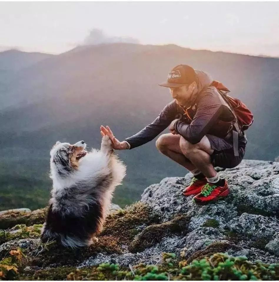 201904/dog-hi-five.jpg