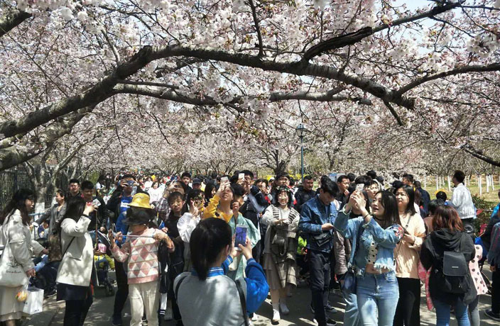 112 Million Tourist Trips in China Over Qingming Festival