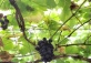 Field Trip: Organic Grape Vineyard and Lotus Park!