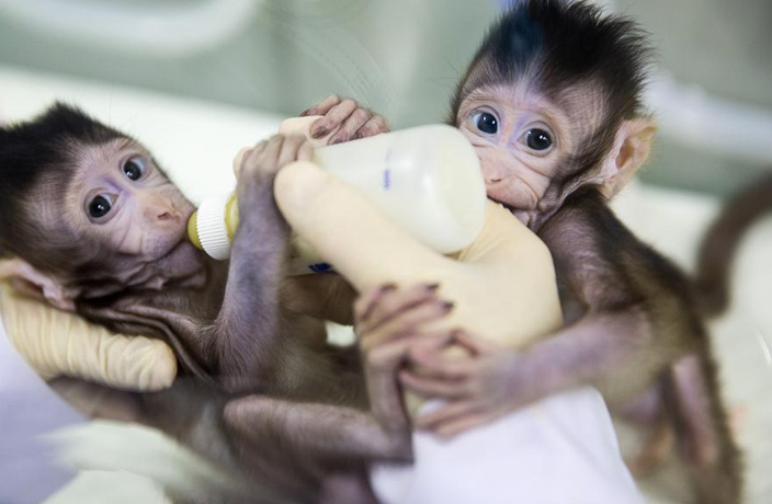First Human-Monkey Chimeras Created by Scientists in China