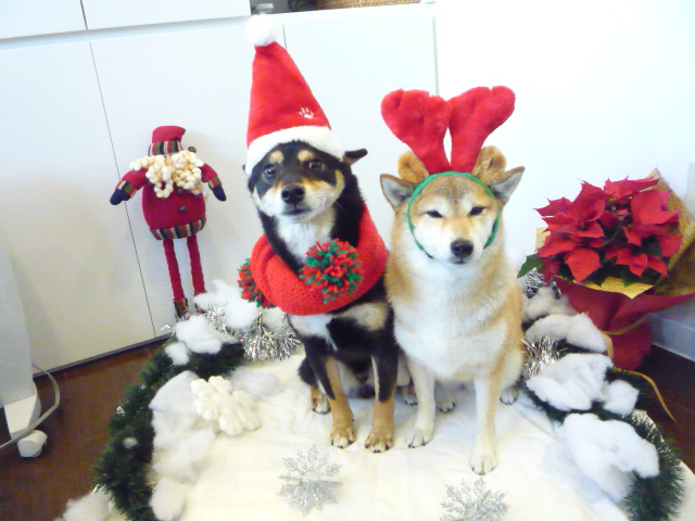 ICVS-pet-christmas-party.jpg