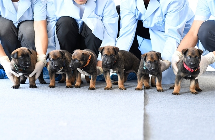 6 Perfect Cloned Pups Join the Beijing Police K9 Crew