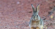 Hunter Contracts Bubonic Plague Eating Wild Rabbit in Inner Mongolia