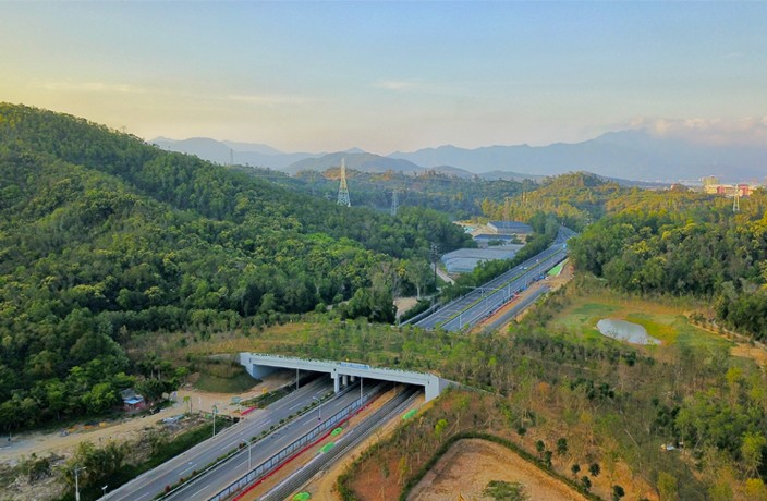Animals Crossing Safely in Shenzhen's New Ecological Corridor