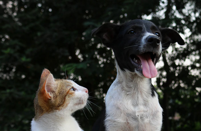 Shenzhen Becomes 1st Chinese City to Ban Dog and Cat Consumption