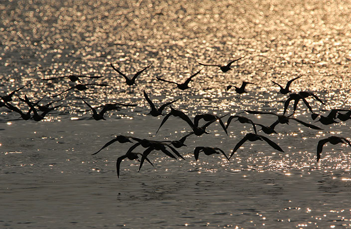 The Importance of Migratory Birds and How We Can Protect Them