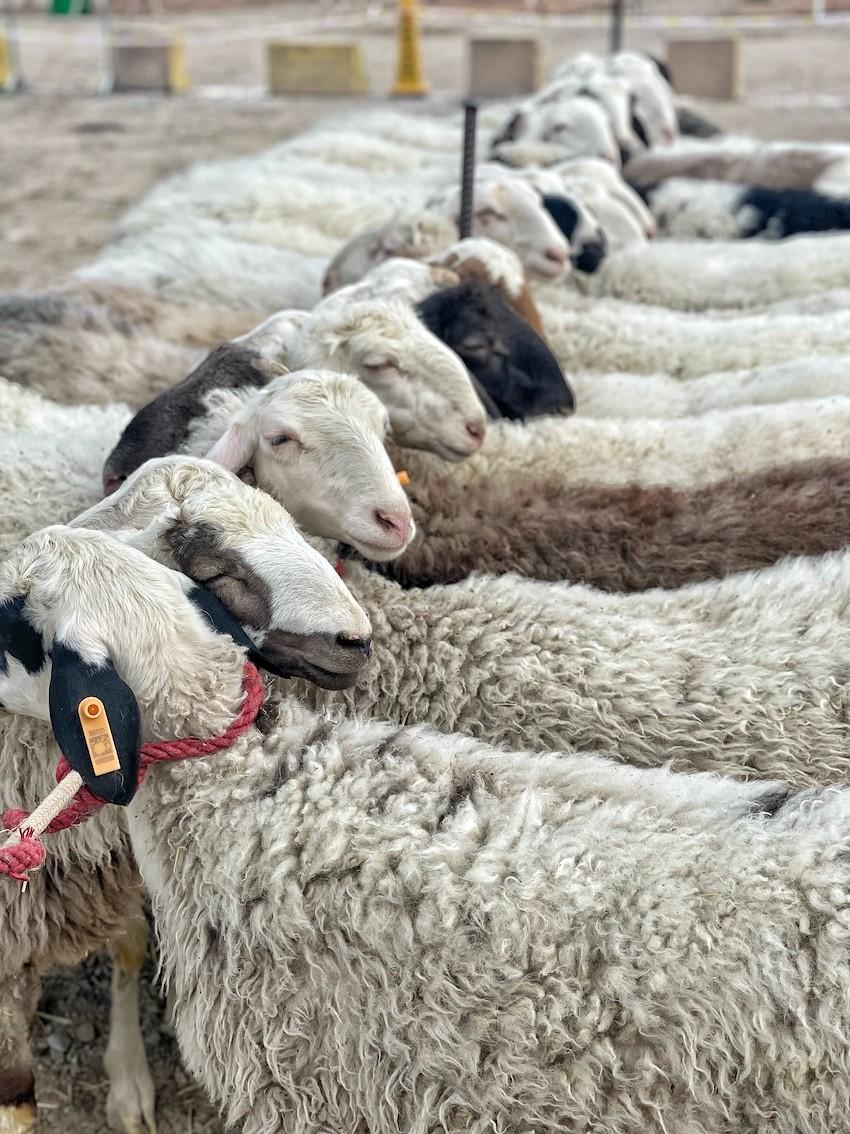 Livestock-Market.jpg